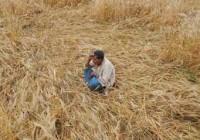 crop loss